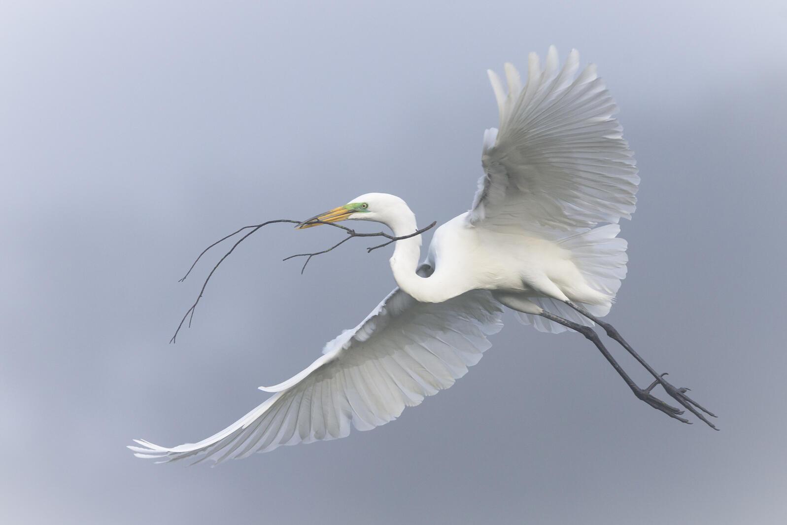 Great Egret. Photo: Mary Lundberg/Audubon Photography Awards.