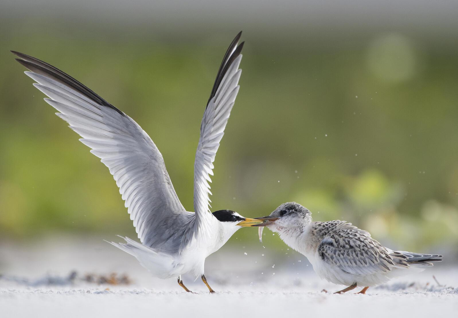 Anja Trepper/Audubon Photography Awards