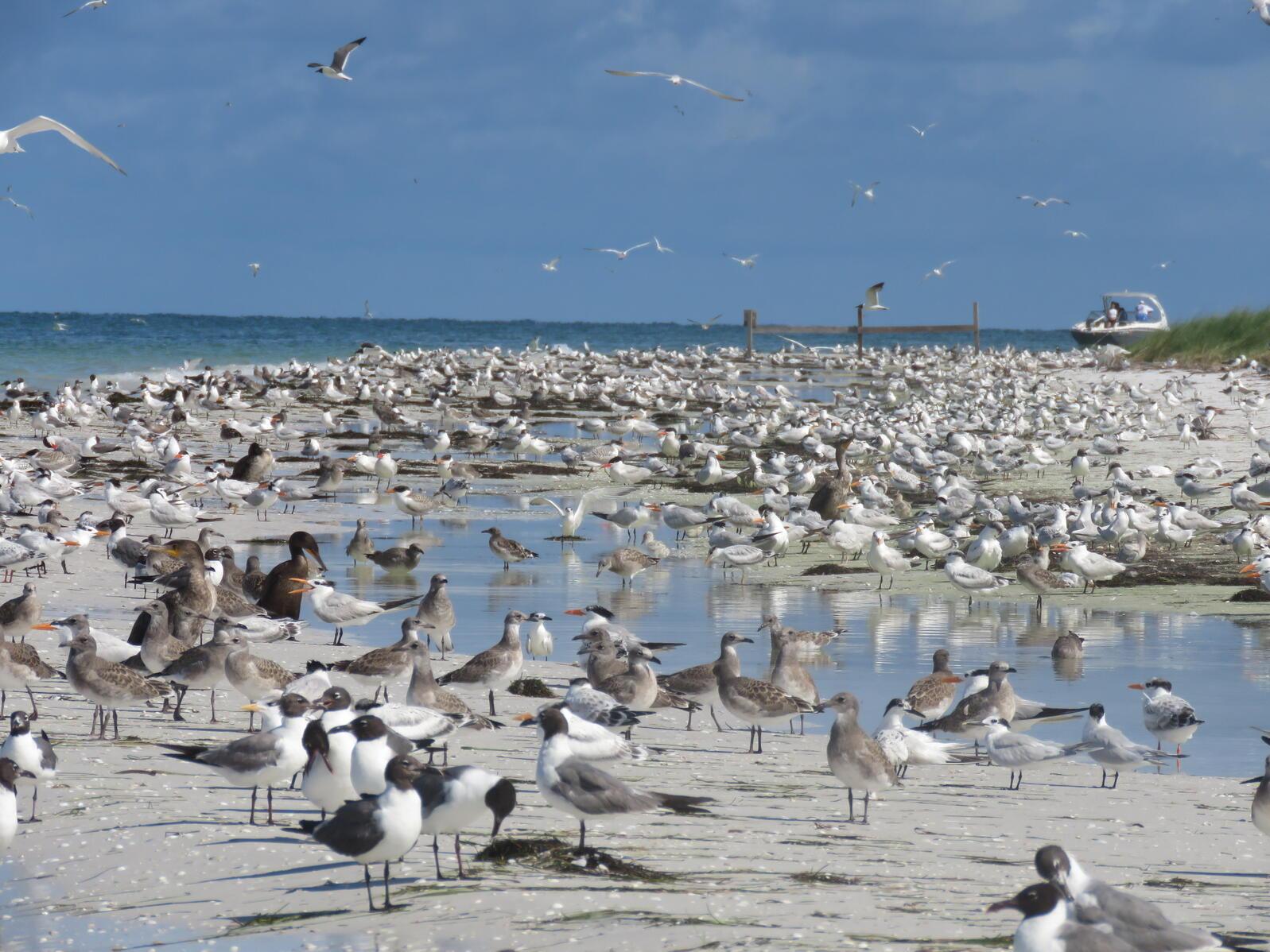 Incredible bird diversity on Three Rooker.