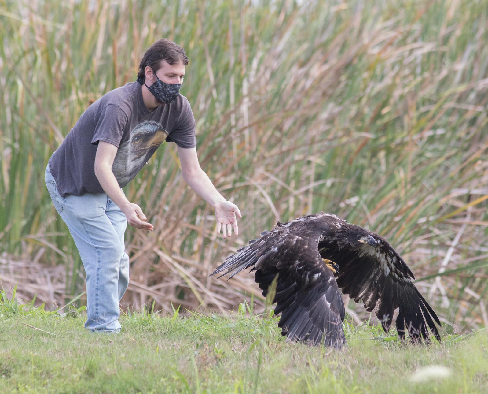 David Fitzpatrick releases a fledgling Bald Eagle. Photo: Katie Houvener.