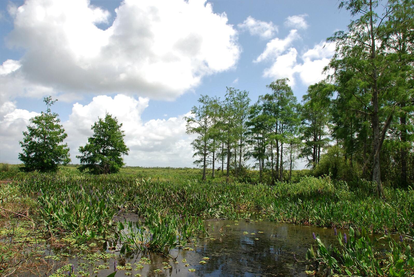 Marsh and prairie restoration.