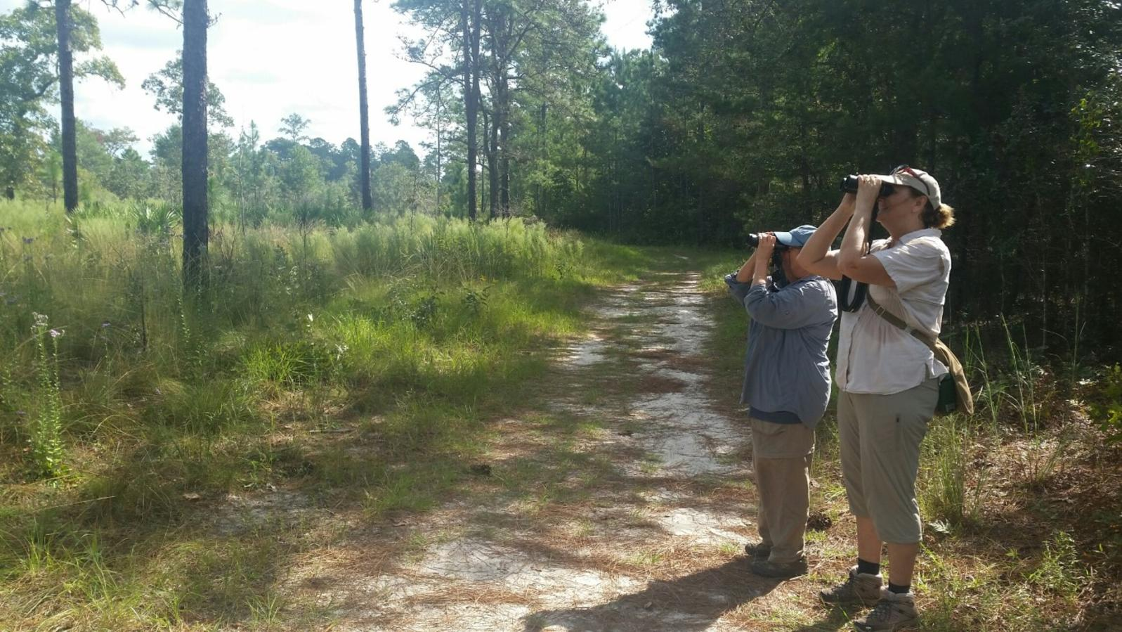Image of volunteers surveying Julington-Durbin Preserve