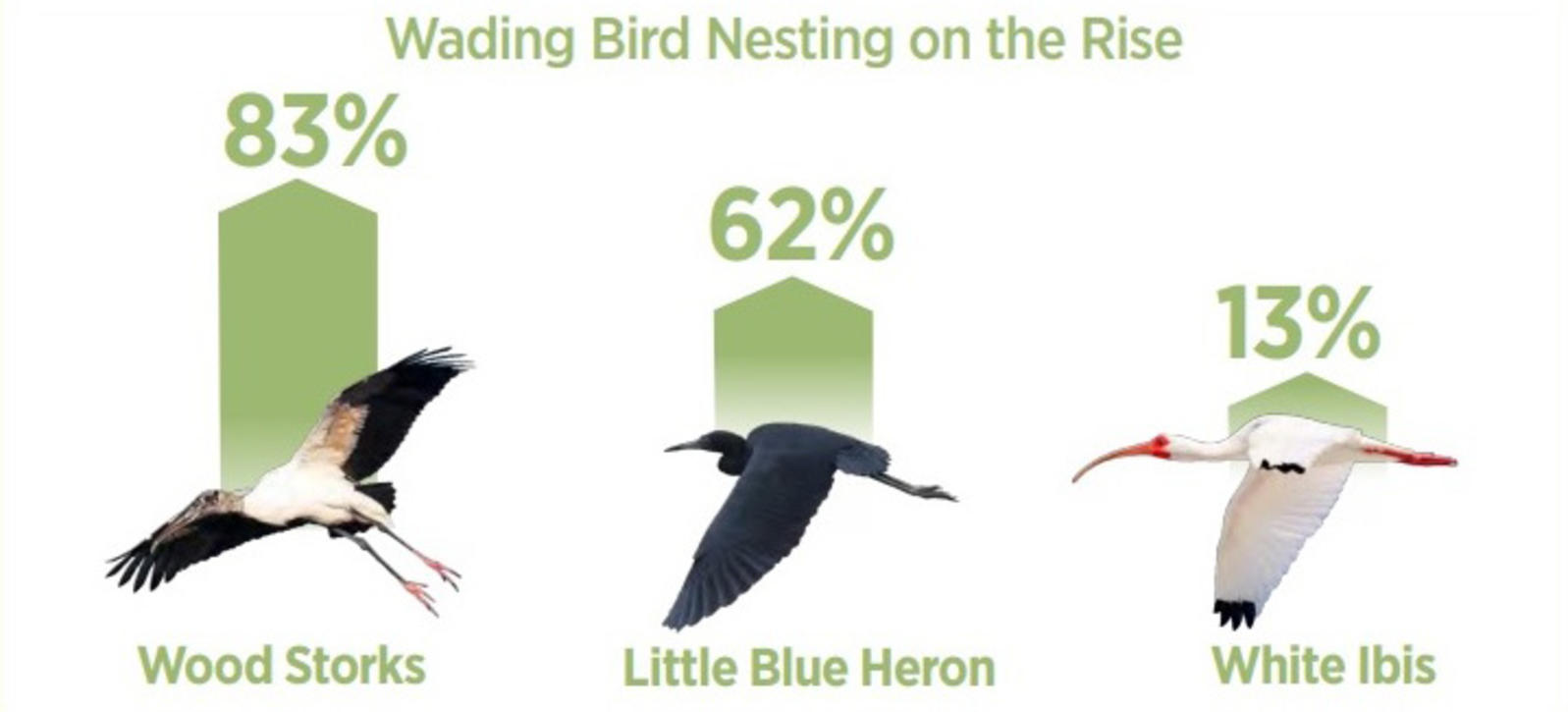 Chart of wading bird nesting