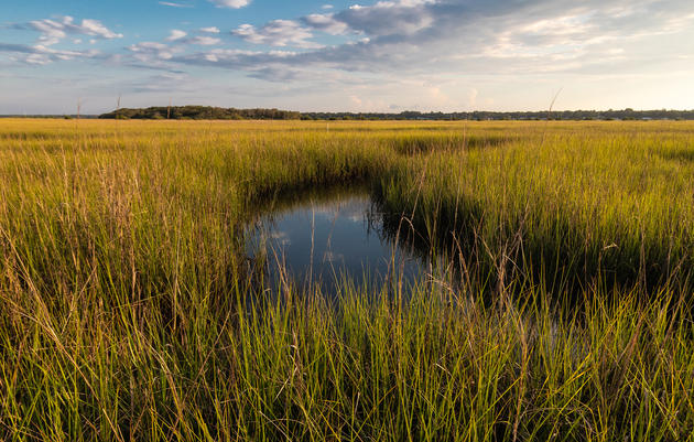 St. Johns County's Fish Island Protected as Public Park