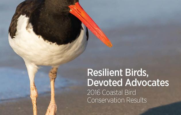 Resilient Birds, Devoted Advocates: 2016 Coastal Bird Conservation Results