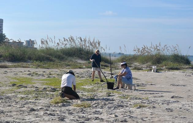 Clearing the Way for a Black Skimmer Colony in 2014