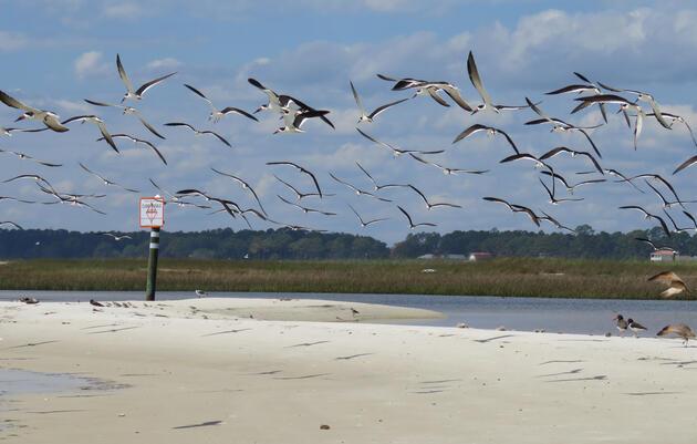 Coastal Stewardship Answers Critical Questions