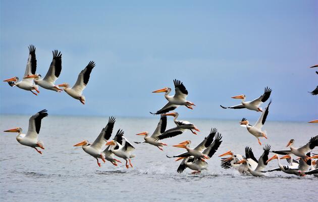 Ballot Measures Bring Good News for Florida's Environment