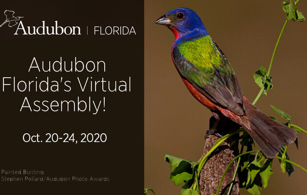 Audubon Florida Virtual Assembly 2020 Webinars
