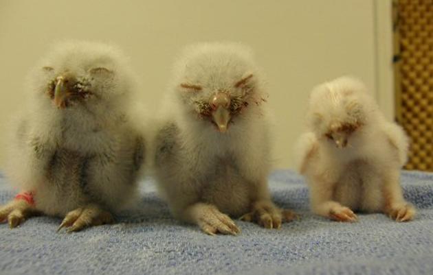 Baby Owl Shower