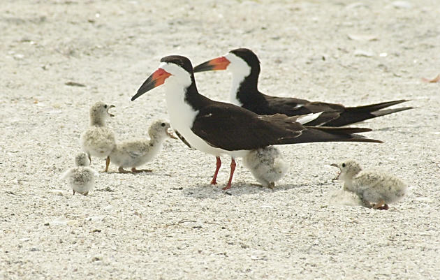 Coastal Bird Stewardship