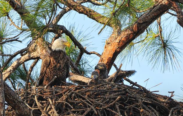 Audubon EagleWatch