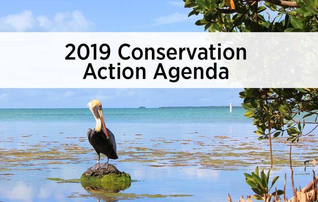 Read Audubon Florida's 2019 Conservation Action Agenda