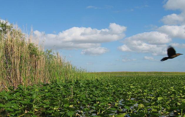 Audubon Florida Cheers Legislators and Governor Scott for Legacy Florida Bill