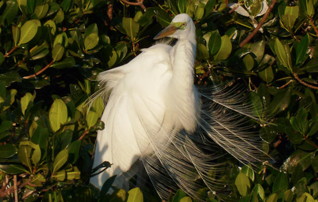 Florida Coastal Islands Sanctuaries