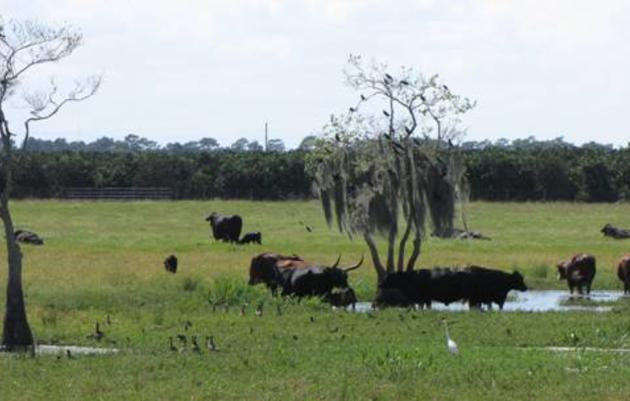 Florida's Special Places: Scrub Pens Road in Highlands County