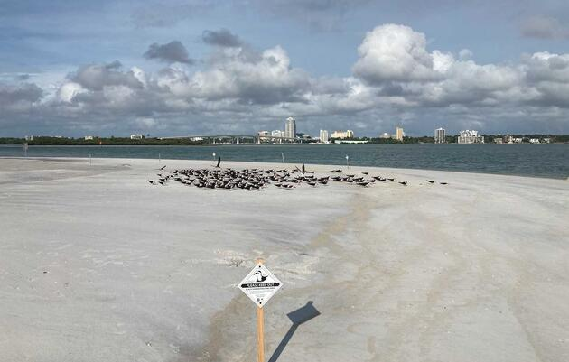 Hurricane Elsa Impacts on Gulf Coast Beach-Nesting Birds