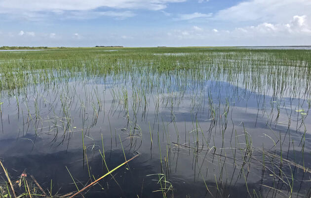 Audubon Florida Supports New Lake Okeechobee Water Management Plan - With Modifications