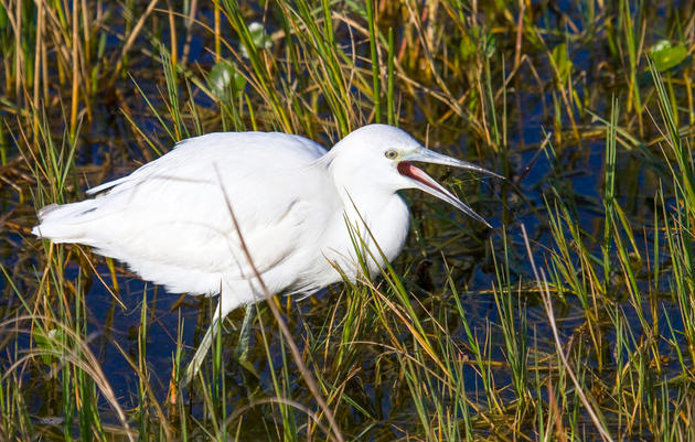Major Step Forward for Everglades Restoration
