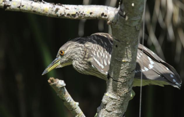 Read Audubon Florida's 2016 Conservation Action Agenda