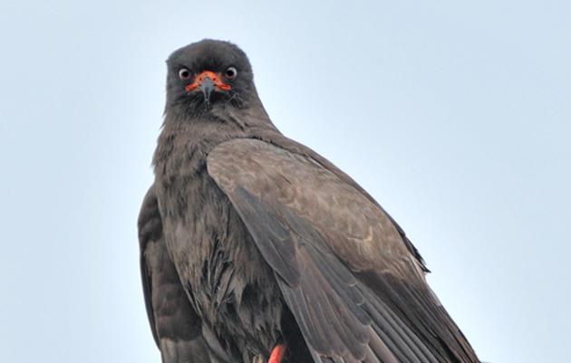 Florida's Imperiled Birds