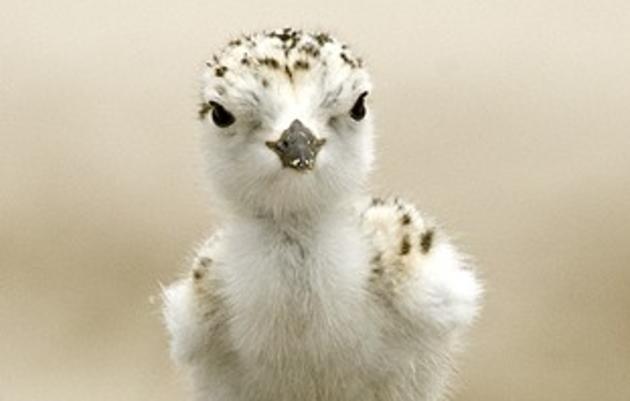 Audubon Florida News