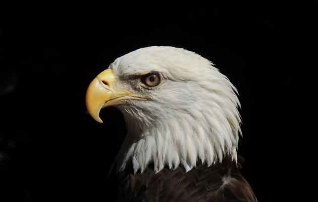 Eagle Eyes on the Environment Education Program