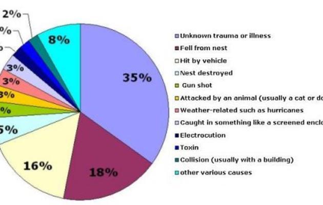 Clinical/Rehabilitation Programs