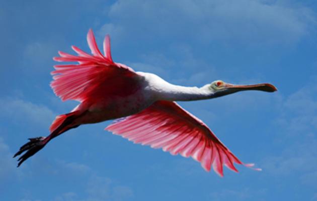 Audubon's Everglades Science Center