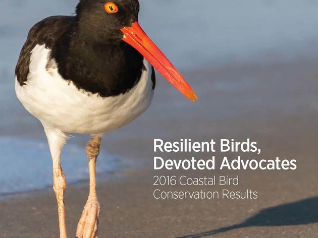 Resilient Birds, Devoted Advocates: 2016 Coastal Bird Conservation Results