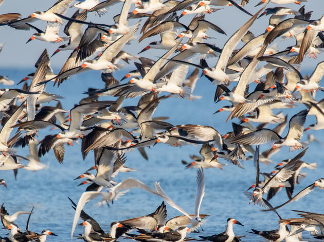 Audubon Florida Earns Major Gulf Restoration Grant