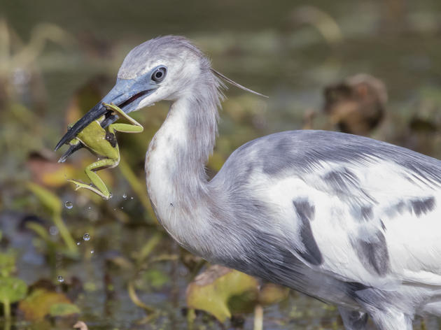 The Lake Apopka North Shore: A Birding Paradise