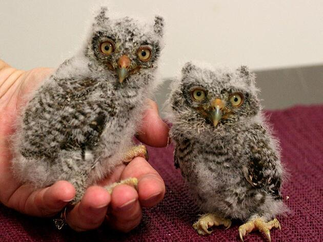 Baby Season Recap at the Center for Birds of Prey