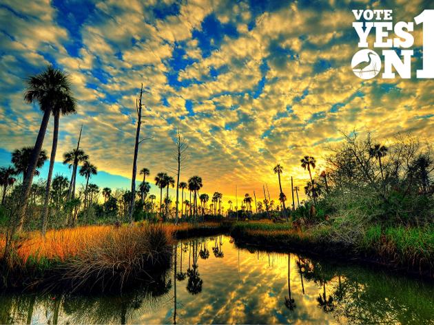 Audubon Society of the Everglades Celebrates BIG Amendment 1 Victory