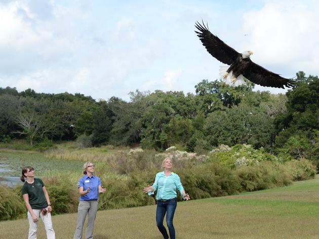 Attorney General Pam Bondi Releases Audubon's 525th Rehabilitated Bald Eagle