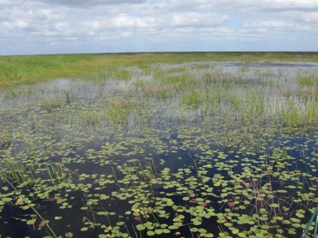 Everglades Funding at Stake in SFWMD Board Vote