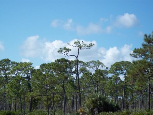 New Proposal to Fund Important Conservation Projects in Florida