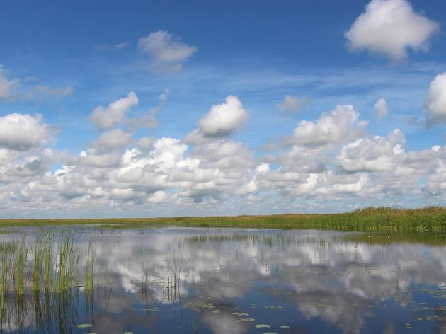 Good Water Management is Good for Northern Everglades Birds and Wildlife
