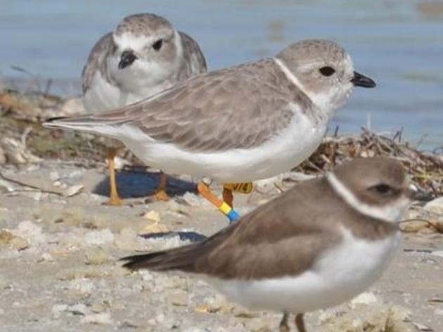 This Season's Nature Coast Surveys Resume with a Stink!