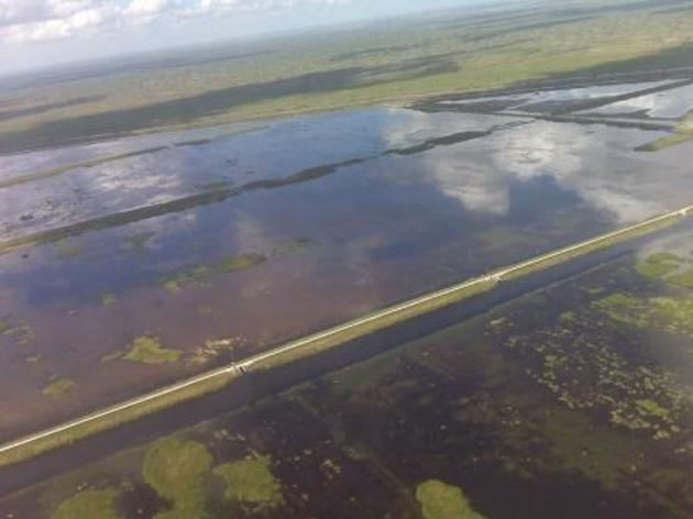 Audubon Expert Testimony Drives Key Decision for Clean Water in the Everglades
