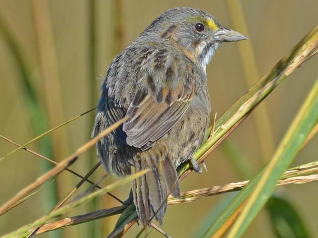 "Audubon Establishes ""Reid Hughes Marsh Sanctuary"" in Nassau County"