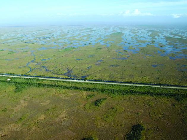 Audubon Celebrates Next Phase of Tamiami Trail Project