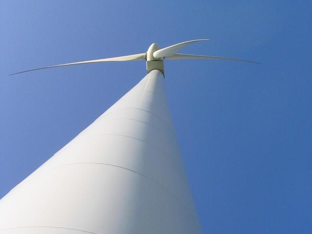 Audubon Advocates Speak Up for Birds in Palm Beach Wind Turbine Debate
