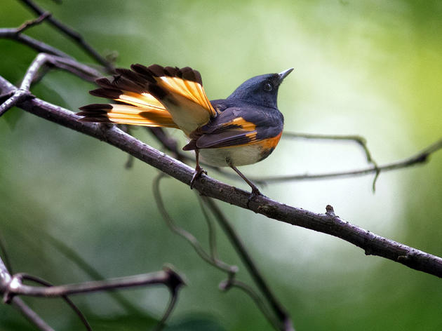 Survival by Degrees: 389 Bird Species on the Brink