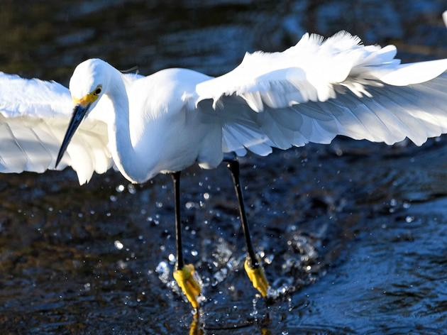 Full Speed Ahead on Audubon-Supported Everglades Agricultural Area Reservoir