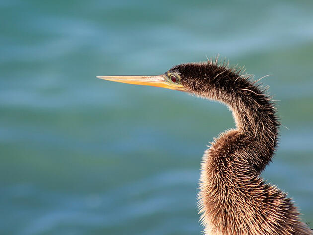 Audubon Science to Help Inform Army Corps Efforts to Combine, Speed Restoration for Biscayne Bay and More