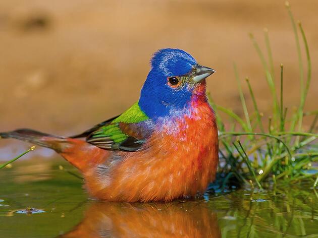 Read Audubon Florida's 2021 Conservation Action Agenda