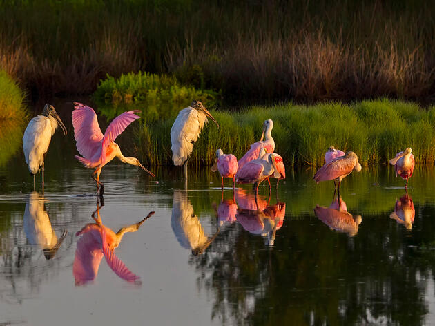 Florida Keys National Marine Sanctuary Plan Proposes New Protections for Vulnerable Wading Birds