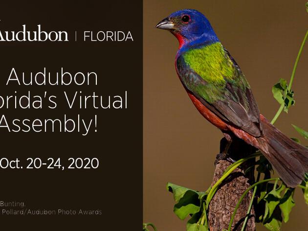 Audubon Florida Virtual Assembly 2020 Webinars