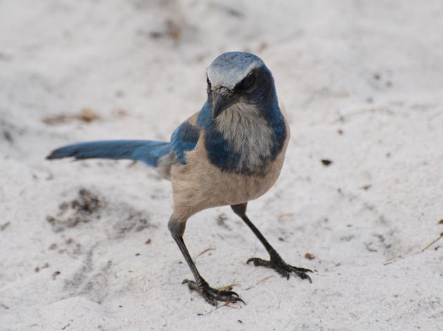 Florida Scrub-Jays: 2019 By the Numbers